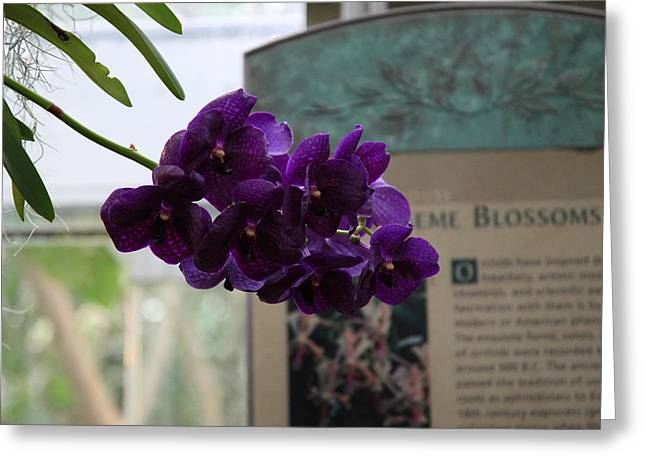 Garden Greeting Cards - Flowers - US Botanic Garden - 011315 Greeting Card by DC Photographer