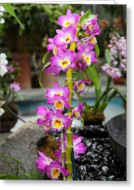 Botanic Greeting Cards - Flowers - US Botanic Garden - 01134 Greeting Card by DC Photographer
