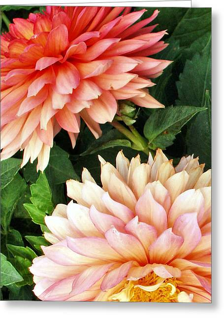 Tom Druin Greeting Cards - Flowers...warm Breeze Greeting Card by Tom Druin