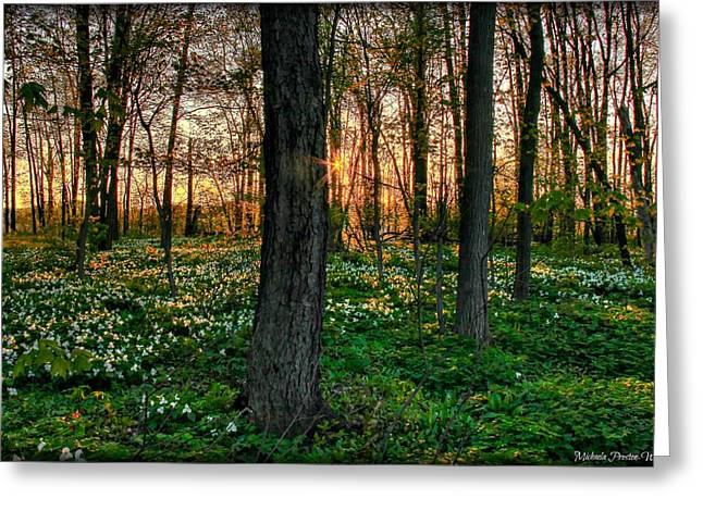 Michaela Preston Greeting Cards - Flowery Sunset Greeting Card by Michaela Preston