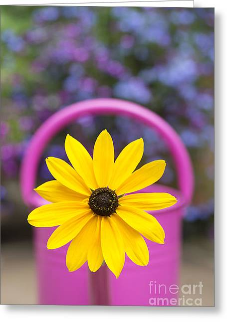 Flowerhead Greeting Cards - Flowery watering can Greeting Card by Tim Gainey