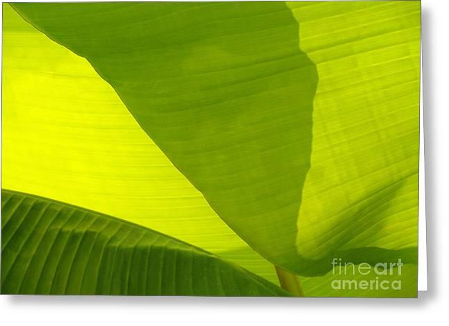 Banana Plants Greeting Cards - Flowing Banana Leaf Greeting Card by Anna Lisa Yoder