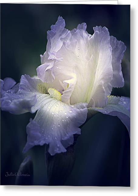 White Beard Photographs Greeting Cards - Flowing Iris in White Greeting Card by Julie Palencia