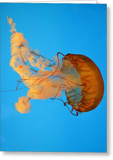 Plankton Greeting Cards - Flowing Jellyfish Greeting Card by Quita Jean
