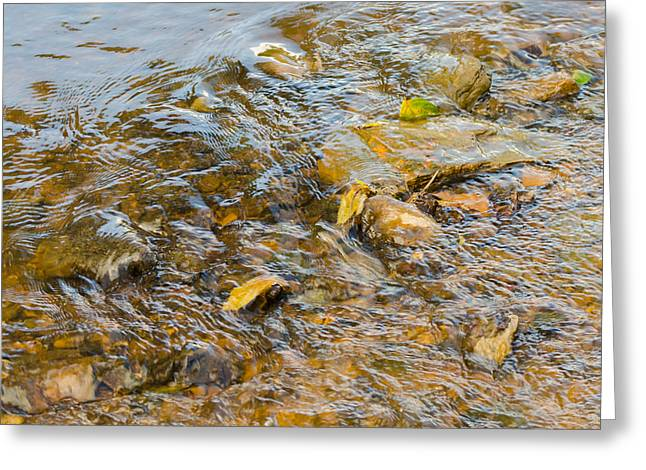 Murray Ky Greeting Cards - Flowing Leaves Greeting Card by Neil Todd