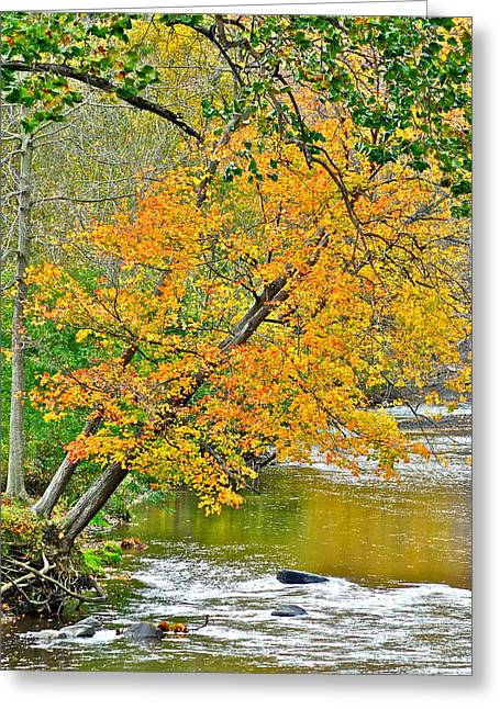 Rainbow Unicorn Greeting Cards - Flowing River Leaning Tree Greeting Card by Frozen in Time Fine Art Photography