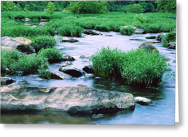 Ozark Greeting Cards - Flowing River, St. Francis River Greeting Card by Panoramic Images