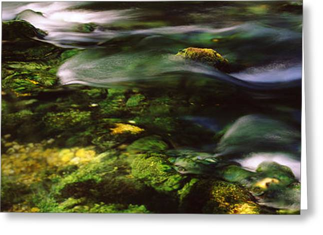 Ozark Greeting Cards - Flowing Stream, Blue Spring, Ozark Greeting Card by Panoramic Images