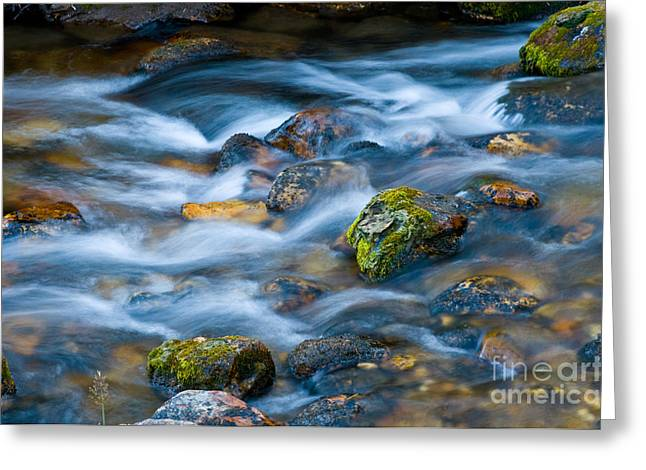 Clean Water Greeting Cards - Flowing Stream Greeting Card by William H. Mullins