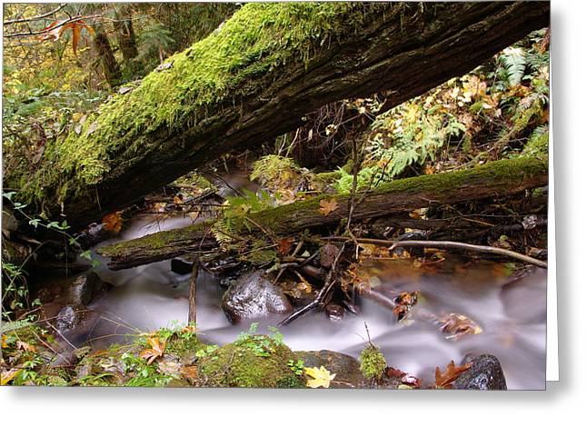 Fallen Leaf Greeting Cards - Flowing Under A Log Greeting Card by Jeff  Swan