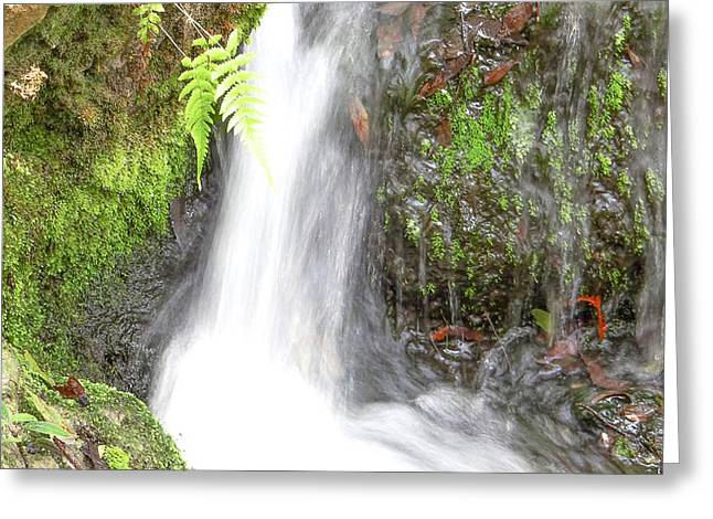 Autumn Photographs Mixed Media Greeting Cards - Flowing Water Greeting Card by Dennis Dugan