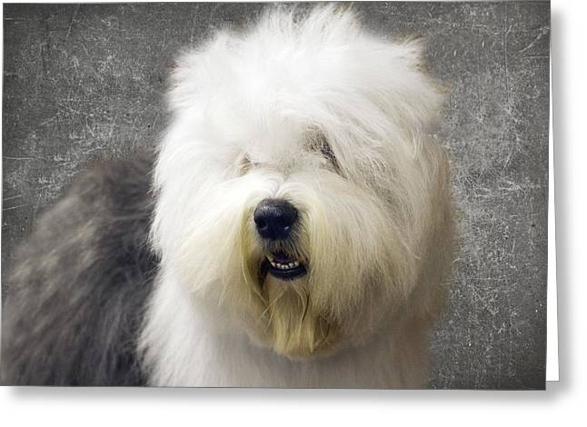 Sheep Dog Greeting Cards - Fluff Face Greeting Card by Rebecca Cozart
