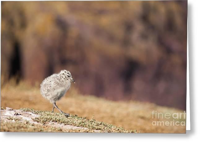 Fluffball Walking Greeting Card by Anne Gilbert