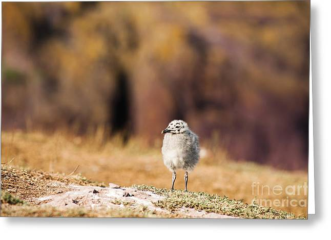 Adolescent Greeting Cards - Fluffball Watching Greeting Card by Anne Gilbert