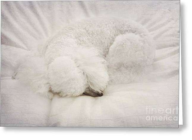 Curled Up Greeting Cards - Fluffy Ball Greeting Card by Svetlana Sewell