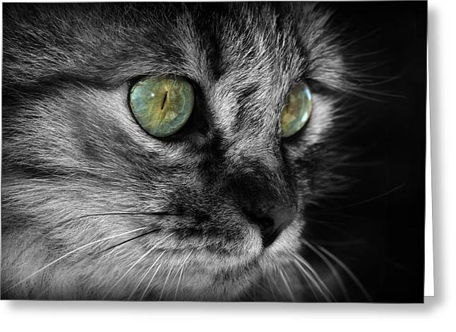 Gray Hair Greeting Cards - Fluffy Greeting Card by Barb Gabay