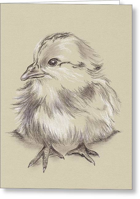 Baby Bird Drawings Greeting Cards - Fluffy Barred Rock Chick Greeting Card by MM Anderson