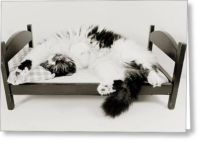 Cats Pyrography Greeting Cards - Fluffy Cat in a Bed Greeting Card by Heather Saulsbury