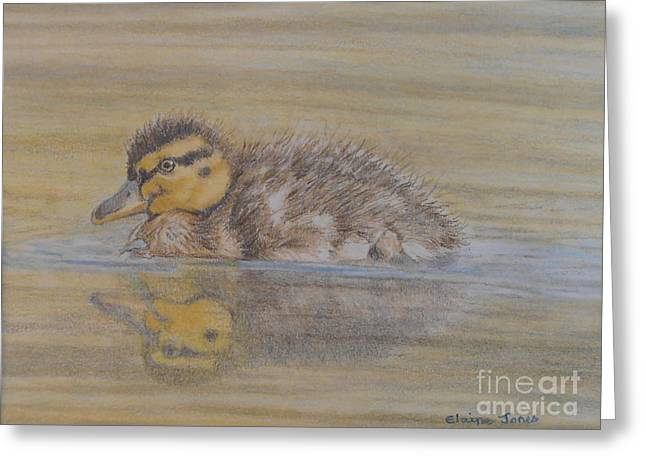 Baby Bird Drawings Greeting Cards - Fluffy Duckling Greeting Card by Elaine Jones