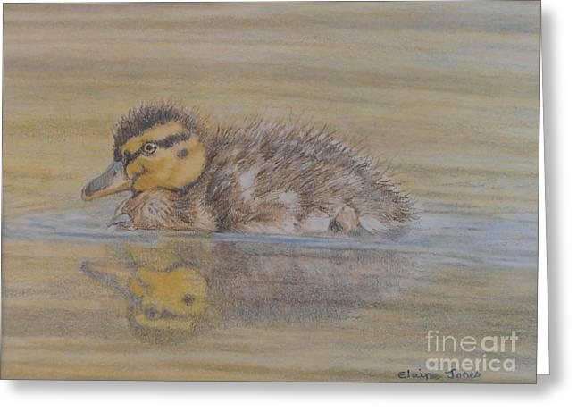 Mallard Drawings Greeting Cards - Fluffy Duckling Greeting Card by Elaine Jones