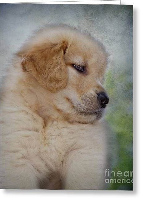 Groomer Greeting Cards - Fluffy Golden Puppy Greeting Card by Susan Candelario