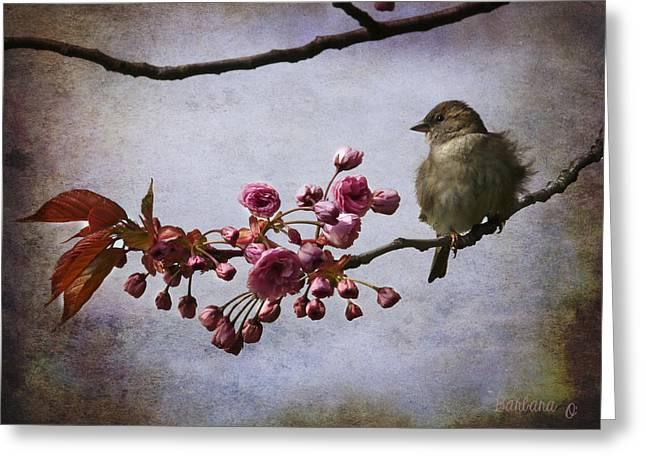 Barbara Orenya Greeting Cards - Fluffy Sparrow  Greeting Card by Barbara Orenya