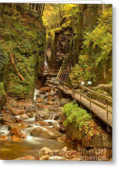 Lush Green Greeting Cards - Flume Gorge At Franconia Notch Greeting Card by Adam Jewell