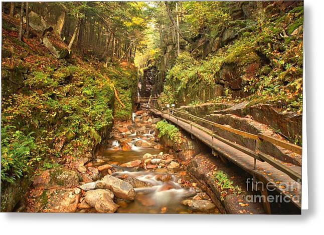 Lush Green Greeting Cards - Flume Gorge Landscape Greeting Card by Adam Jewell