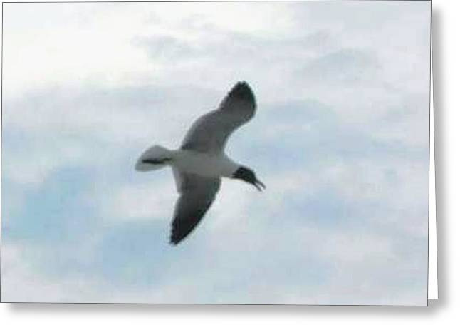 Flying Seagull Greeting Cards - Fly Away 2 Greeting Card by Bonnie Clark Weatherford