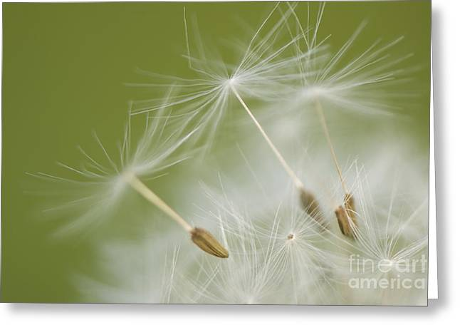 Shed Greeting Cards - Fly Away Greeting Card by Anne Gilbert