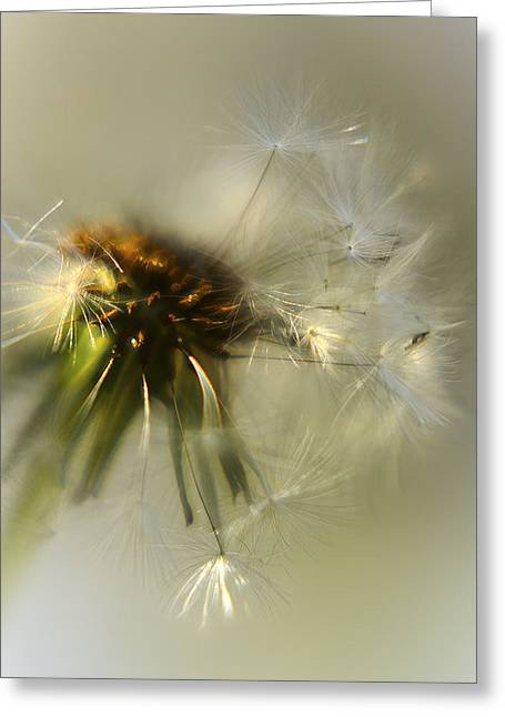 Dandelion Digital Art Greeting Cards - Fly Away Greeting Card by Camille Lopez
