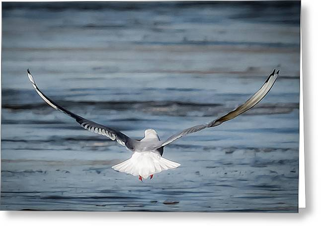 Flying Gull Greeting Cards - Fly Away Gull Greeting Card by James Barber
