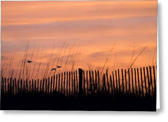 Myrtle Beach Ocean Photography Greeting Cards - Fly Away Home Greeting Card by Stephanie McDowell