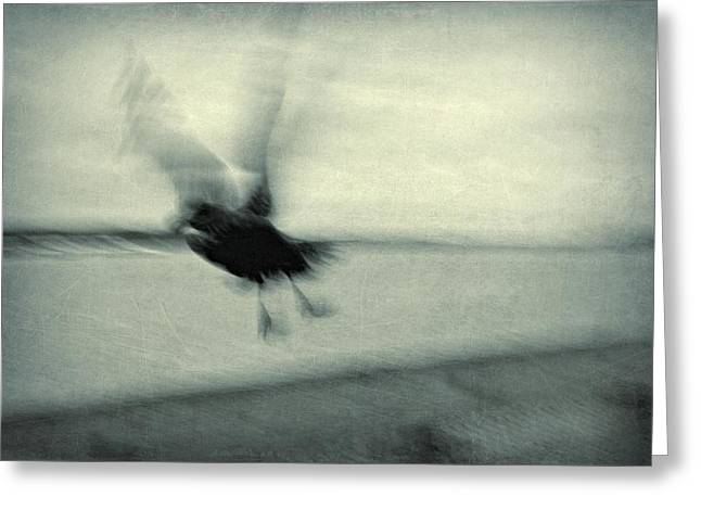 Flying Seagull Greeting Cards - Fly Away Greeting Card by Patricia Strand