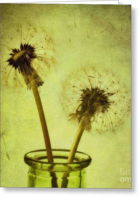 Best Sellers -  - Floral Still Life Greeting Cards - Fly Away Greeting Card by Priska Wettstein