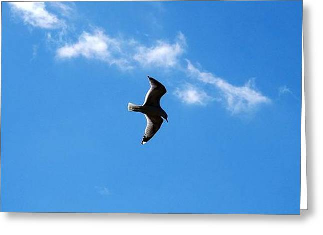 Flying Seagull Greeting Cards - Fly Away Greeting Card by Zinvolle Art
