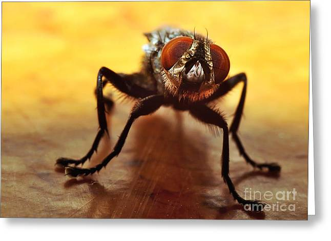 Gold Bug Greeting Cards - Fly Eyes Greeting Card by Kaye Menner
