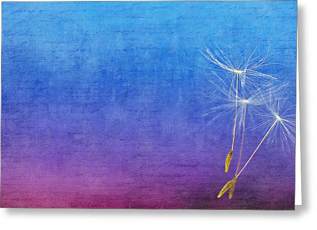 Rain Drop Mixed Media Greeting Cards - Fly Greeting Card by Heike Hultsch