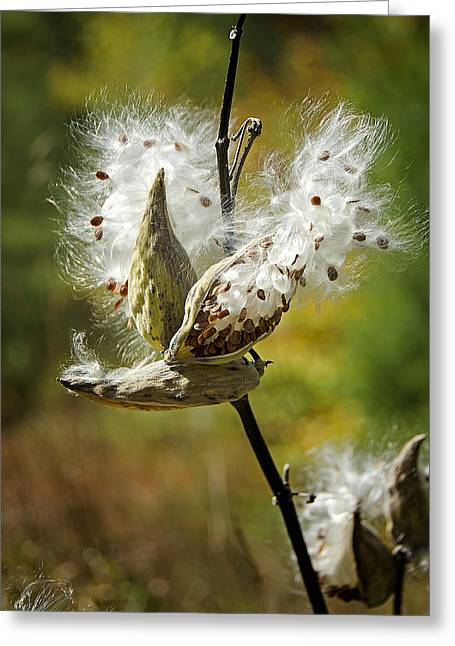 Swamp Milkweed Greeting Cards - Fly Me Away Greeting Card by Donna Doherty