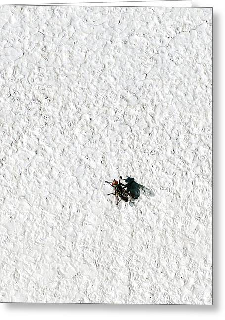 Wrapped Around Greeting Cards - Fly On A Wall Greeting Card by Alexander Senin