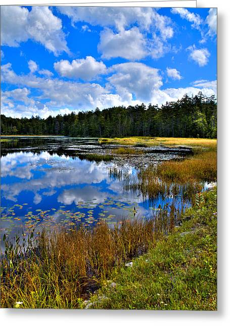 Fir Trees Greeting Cards - Fly Pond in the Adirondacks II Greeting Card by David Patterson
