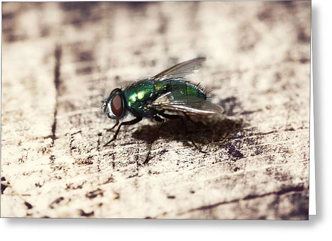 Spider And Fly Greeting Cards - Fly Profile Greeting Card by Melanie Lankford Photography