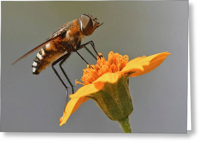 Fly Resting On Wildflower, Edinburg Greeting Card by Larry Ditto