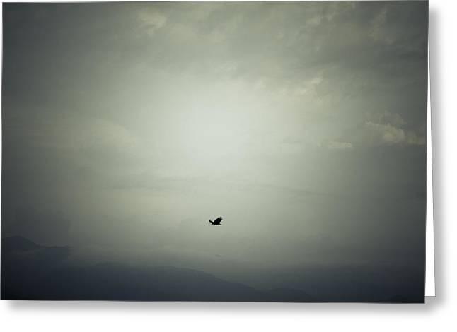 Bird Flight Greeting Cards - Fly Greeting Card by Shane Holsclaw