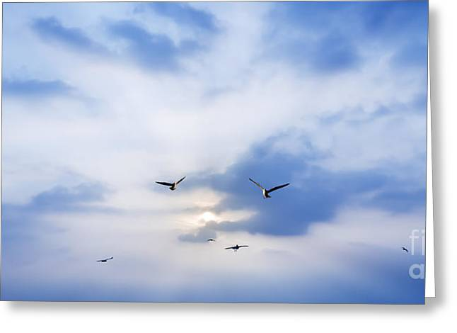 Twilight Views Greeting Cards - Fly To Freedom Greeting Card by Setsiri Silapasuwanchai