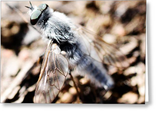 Fly Greeting Card by Toppart Sweden