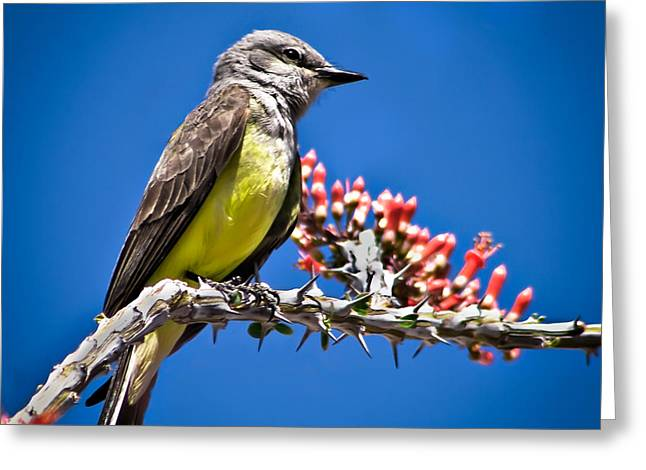 Flycatcher Greeting Card by Robert Bales