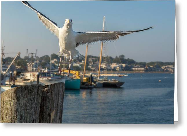 Provincetown Greeting Cards - Flying Away Greeting Card by Bill  Wakeley