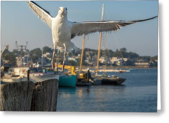 Boats In Harbor Greeting Cards - Flying Away Square Greeting Card by Bill  Wakeley