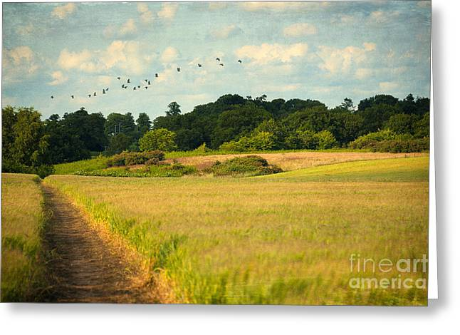 Nature Scene Digital Art Greeting Cards - Flying Away Greeting Card by Svetlana Sewell